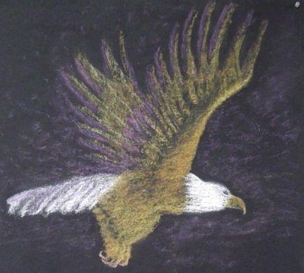 adelaar 4