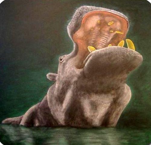nijlpaard 1